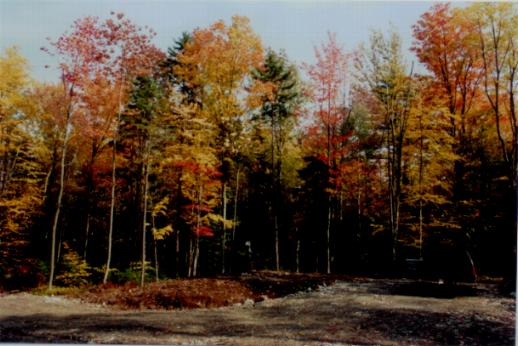 Fall Foliage Image